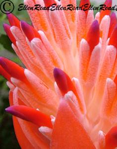 Bromeliad Spires