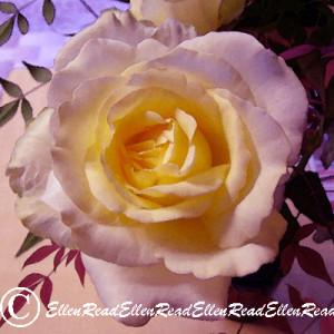 Rose & Fern