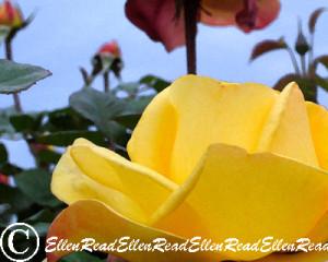 Rose & Sky 2