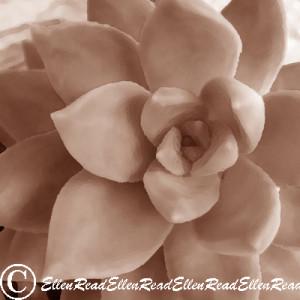 Succulent 2 Sepia