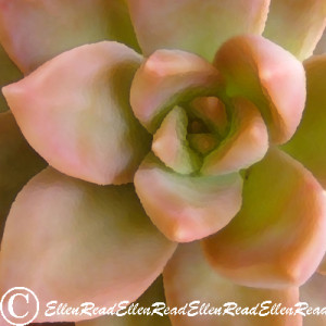 Succulent Bronze 2