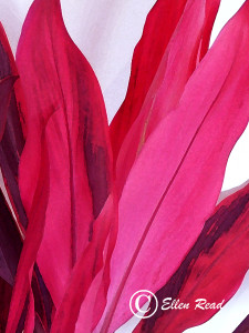 Cordyline Beauty 3